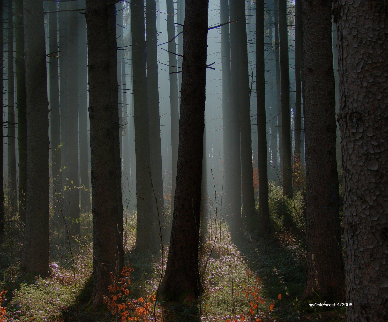 sun_fog_forest_nebel_rays_dust_wald_sonn